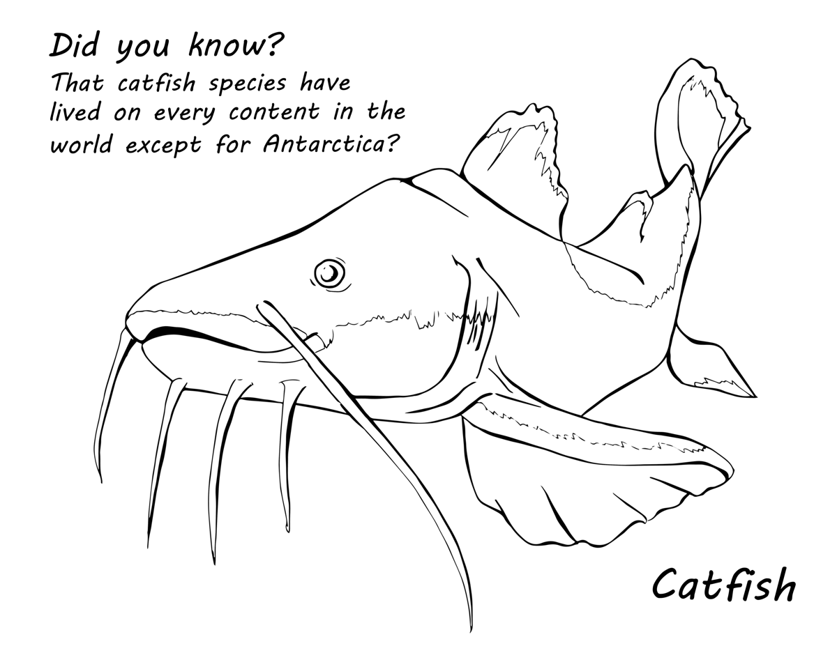 Catfish Web