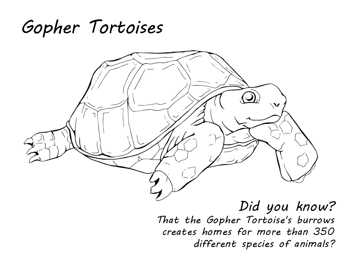 Tortoise Web